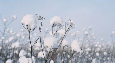 Ноябрь. Цвет месяца - белый