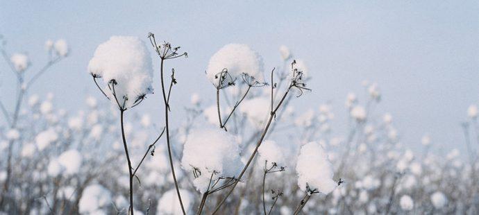 Ноябрь. Цвет месяца — белый
