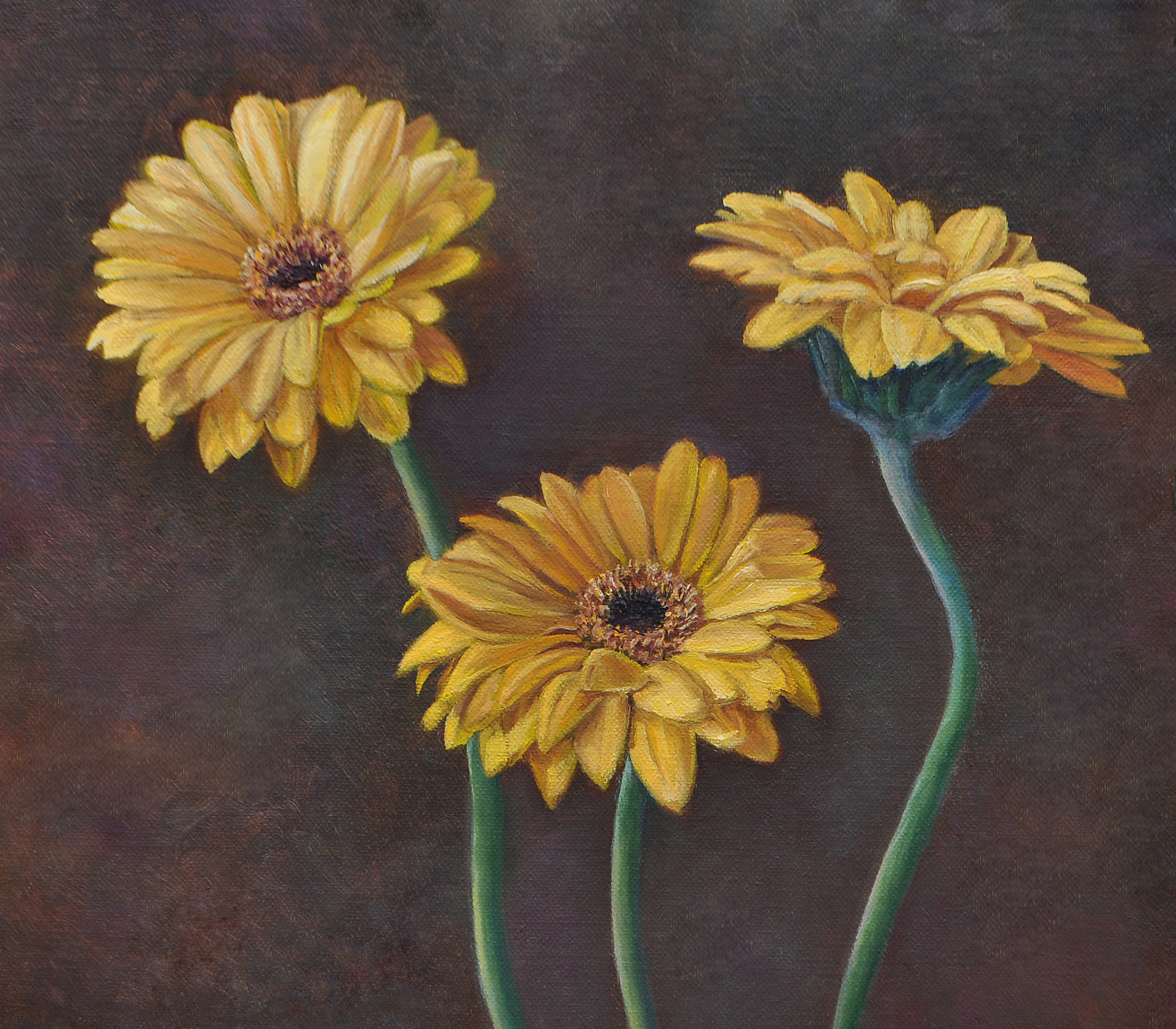 """Yellow Gerberas"""